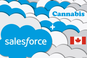 cannabis and salesforce